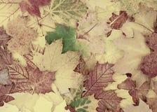 Mooie herfstachtergrond van esdoornbladeren royalty-vrije stock fotografie