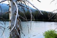 Mooie het meerkreek of stroom van het Yellowstone Nationale Park onder de bossen royalty-vrije stock foto