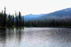 Mooie het meerkreek of stroom van het Yellowstone Nationale Park onder de bossen royalty-vrije stock afbeelding