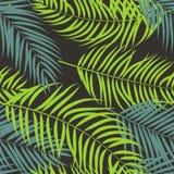 Mooie het Silhouet van het Palmblad Vector Als achtergrond Stock Afbeelding