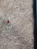 Mooie het waterscène van plattelandsdedham buiten de ruimte van het aardlandschap; onzelieveheersbeestje stock foto's