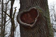 Mooie hol in een boom in de vorm van een hart stock foto