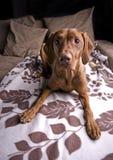Mooie hond. royalty-vrije stock afbeeldingen