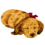 Mooie hond Stock Afbeelding