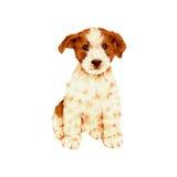 Mooie hond Stock Foto's