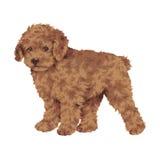 Mooie hond Stock Afbeeldingen