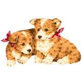 Mooie hond Royalty-vrije Stock Fotografie