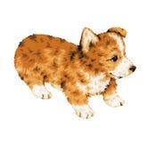 Mooie hond Royalty-vrije Stock Foto's