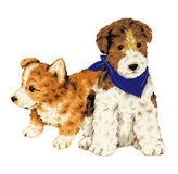 Mooie hond Royalty-vrije Stock Afbeeldingen