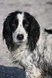 Hond in actie Stock Afbeeldingen