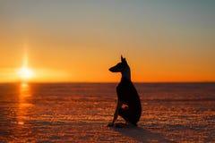 Mooie hond bij zonsondergang in de winter Royalty-vrije Stock Afbeeldingen