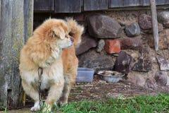 Mooie hond die op zijn eigenaar wachten royalty-vrije stock foto's