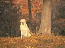Mooie hond die recht de camera bekijken Stock Afbeelding