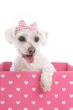 Mooie hond in een roze hartdoos stock afbeeldingen