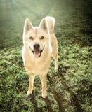 Mooie hond in park Royalty-vrije Stock Afbeeldingen