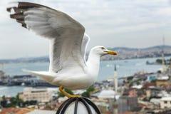 Mooie hoogste mening van Bosphorus en Istanboel stock foto's