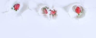 Mooie hoogste mening van vier aardbeien die neer in melk w dalen Royalty-vrije Stock Foto