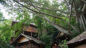 Mooie hutten dichtbij tropische boom Prachtige keten van klein die dorp rond verbazende tropische boom op zonnige dag binnen word stock videobeelden