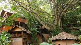 Mooie hutten dichtbij tropische boom Prachtige keten van klein die dorp rond verbazende tropische boom op zonnige dag binnen word stock footage