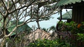 Mooie hutten dichtbij tropische boom Prachtige keten van klein die dorp rond verbazende tropische boom op zonnige dag binnen word stock video