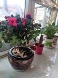 Mooie ingemaakte bloemen op de vensterbank van het bureau royalty-vrije stock fotografie