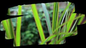 Mooie installaties in de tuin stock footage