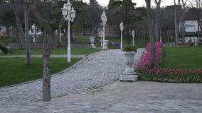 Mooie installaties en tulpen in openbaar park stock videobeelden