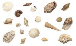 Mooie inzameling van verschillende types van shells stock foto's