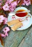 Mooie Japanse kersenboom en een kop thee royalty-vrije stock foto