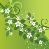 Mooie jasmijnbloemen en groene wervelingen op gree Royalty-vrije Stock Foto's