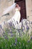 Mooie jonge bruid royalty-vrije stock foto