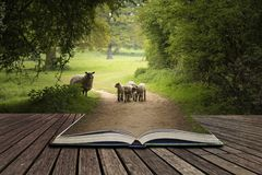 Mooie jonge de Lentelammeren die in Engels plattelandsland spelen Stock Foto