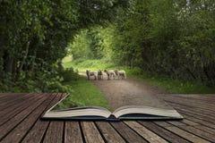 Mooie jonge de Lentelammeren die in Engels plattelandsland spelen Royalty-vrije Stock Fotografie