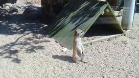 Mooie jonge kleine eekhoorns met leuke acties in een openbaar park stock footage
