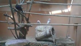 Mooie jonge kleine papegaai met leuke acties in landbouwbedrijf stock videobeelden