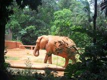 Mooie jonge Olifant bij het Park royalty-vrije stock foto