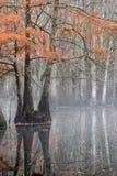Mooie kale cipresbomen in de herfst roestig-gekleurd gebladerte, hun bezinningen in meerwater Het Park van de Chicotstaat, Louisi stock afbeeldingen