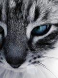 Mooie kat royalty-vrije stock afbeeldingen