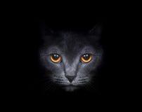 Mooie kat Stock Afbeeldingen