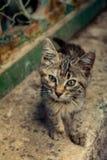 Mooie kat als huisdier in mening stock fotografie