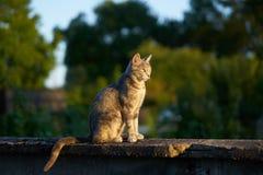Mooie kat in de stralen van zonsondergang royalty-vrije stock fotografie