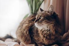 Mooie kat die met verbazende groene ogen grote bakkebaarden en F kijken Royalty-vrije Stock Foto's