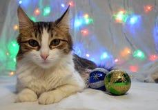 Mooie kat met Kerstmisballen royalty-vrije stock fotografie