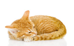 Mooie kattenslaap. Stock Foto's