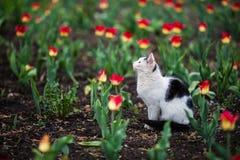 Mooie kattenzitting in bloemen royalty-vrije stock afbeeldingen