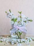 Mooie kersentakjes in kleine decoratieve glasvaas Royalty-vrije Stock Afbeeldingen