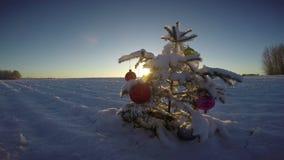 Mooie Kerstboom op sneeuw nieuwe Jaargebied en zonsopgang, 4K stock videobeelden