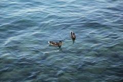 Mooie kind zwarte buizen op de blauwe rivier stock fotografie