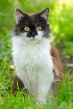 Mooie Kitten Sitting in Gras, Openluchtschot Royalty-vrije Stock Foto