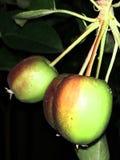 Mooie kleine appelen bij nacht stock afbeelding